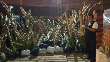 Chiclayo: intervienen camión con más de mil plantones de palmeras y orquídeas