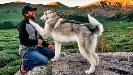 ¿Qué pueden aprender los hombres de los lobos machos alfa?