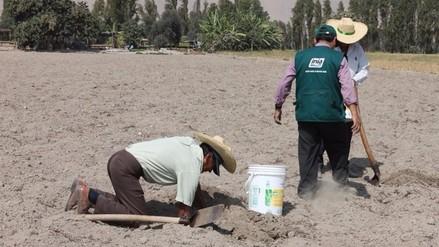 Agricultores del valle de Tambo fueron capacitados por el INIA