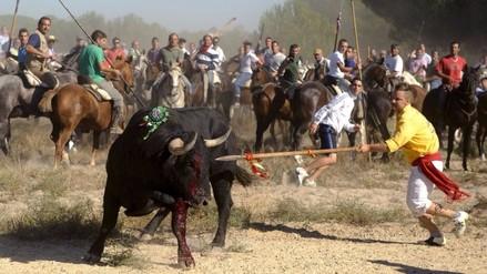 España: prohíben la muerte taurina en torneo Toro de la Vega