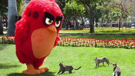 Angry Birds: Red hace de las suyas en las calles de Lima