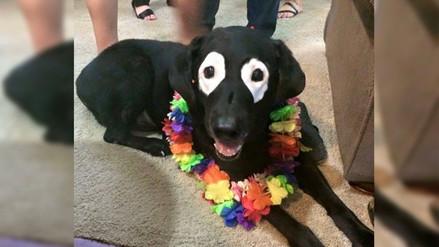 Facebook: Rowdy, el perro con vitíligo que acapara toda las miradas