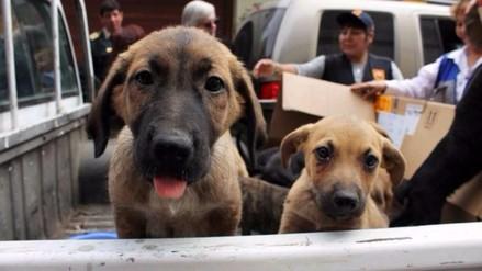 Así de claro: ¿Qué es la Ley de protección animal, se aplica?