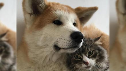 Las 10 fotos donde los perros y gatos son tiernos el uno con el otro