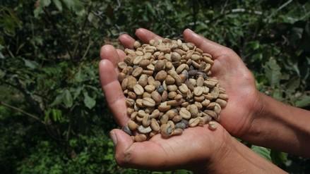Café: Pérdidas por bajo precio ascenderían a S/ 800 mllns. este año