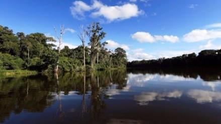 PNUD y Noruega ayudarán para conservación de bosques amazónicos