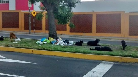 Confirman nuevo caso de rabia canina en Arequipa