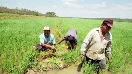 Islay: capacitan a productores de arroz y exponen su problemática en festival