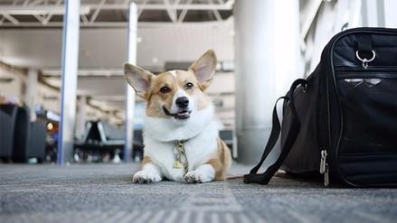 Twitter: perro lleva una semana esperando a su dueño en el aeropuerto