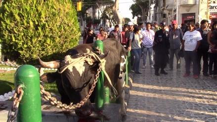 Toro se escapó de camión y sembró pánico en plaza de Chiclayo