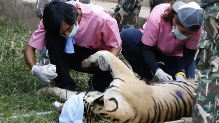 Tailandia rescata a 137 felinos de un templo budista [FOTOS]