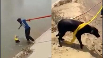 YouTube: utilizó una prenda 'sagrada' para salvar la vida de un perro