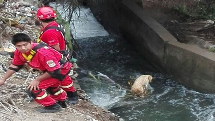 Huacho: bomberos rescatan a can que cayó a canal de regadío