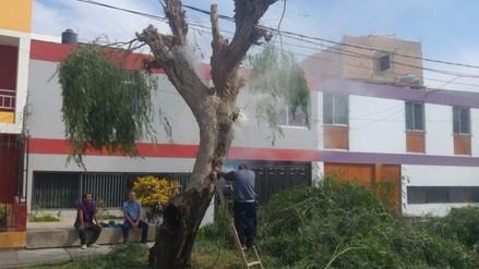 Chiclayo: vecinos erradican panal de abejas que era un peligro para niños