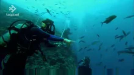 Alertan de riesgo para salud de tiburones cuando son alimentados por turistas