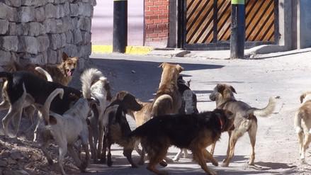Atrapan a perro callejero que mordió a siete ciudadanos en Miraflores