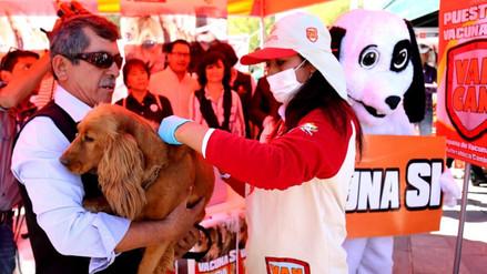 Esperan vacunar 50 mil canes en tercera campaña contra la rabia