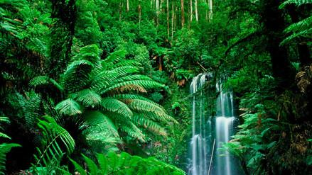 ¿Cómo se siente estar en la selva amazónica o en la sabana africana?