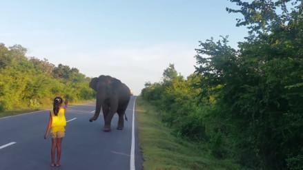 YouTube: Niña detiene a elefante con solo estirar su mano