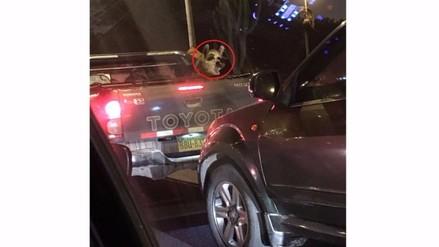 Llama dentro de camioneta indignó a transeúntes en San Isidro