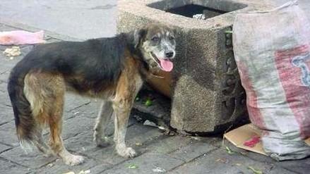 Yunguyo: Red de Salud reporta 48 personas mordidas por canes