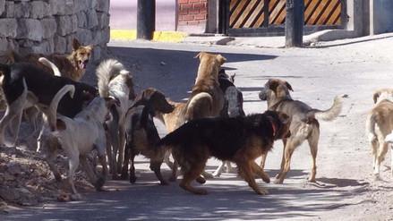 Casos de rabia canina se incrementan en Arequipa
