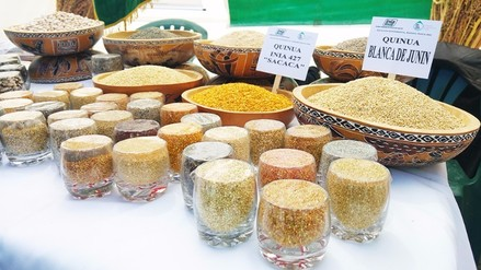 Precio del kilo de quinua se redujo en mercados de Junín