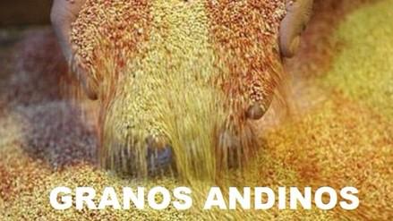 Granos andinos, herencia de los incas: Quinua, tarwi, cañihua y kiwicha