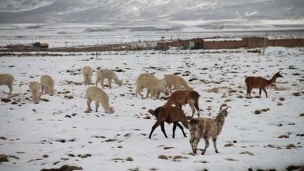 Kits veterinarios insuficientes para protección de animales durante heladas