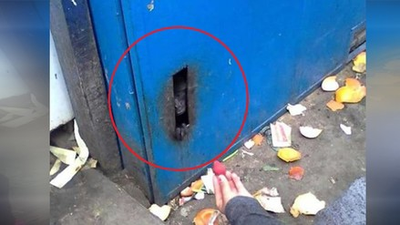 WhatsApp: Pequeño mono era maltratado en mercado de SJL