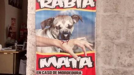 Dos nuevos casos de rabia canina se confirman en Arequipa