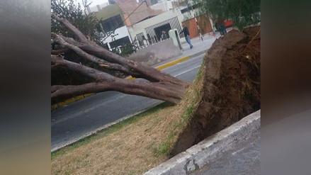 WhatsApp: Vientos huracanados y relámpagos afectan Ilo