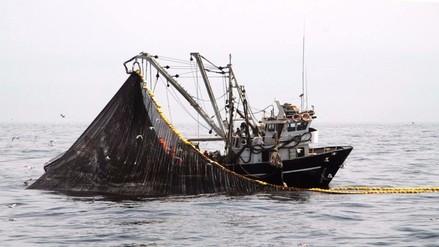 Hasta el lunes 18 de julio no se podrá pescar anchoveta
