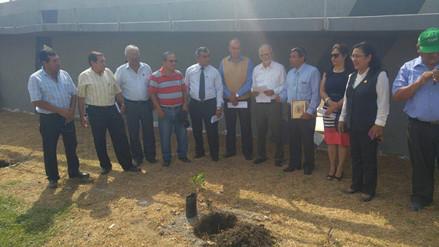 Siembran 400 plantones de tara y eucalipto en el colegio San José de Chiclayo