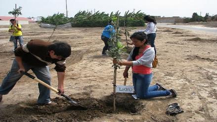 Chiclayo: donarán 500 plantones más para reverdecer áreas de colegio San José