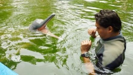 """Delfín """"Huayrurín"""" se recupera de heridas en zoológico de Quistococha"""