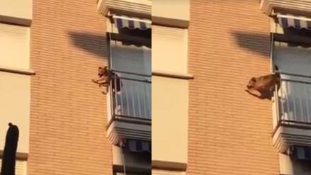 Facebook: la imprudencia de su dueño provocó que un perro se lance desde un balcón