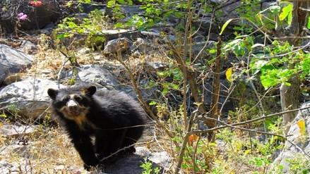 Chaparrí podría perder el reconocimiento de área de conservación privada