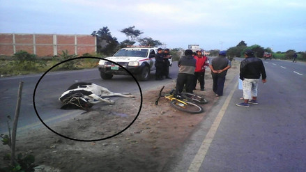 Locos del volante mataron a vaquita preñada en carretera a Monsefú