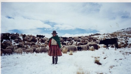 Andahuaylas: entregan forraje para alpacas afectadas por bajas temperaturas