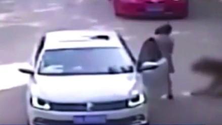 YouTube: mujer china fue atacada por un tigre durante un safari
