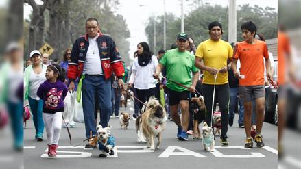 Caninaton 3K: Mascotas participaron de evento solidario en Surco