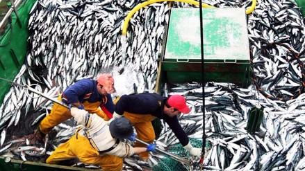 Produce dio por terminada la primera temporada de pesca de anchoveta