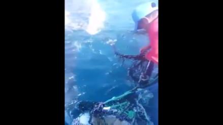 Video: Pescadores artesanales salvan a Ballena en Talara
