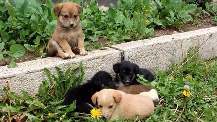 Huancayo: serenos rescatan más de treinta canes abandonados a la semana