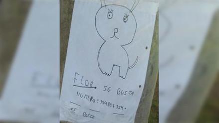 Facebook: niños buscan a su perra extraviada con este