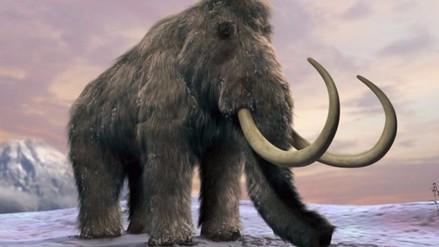 Así fueron los últimos días de los mamuts en la Tierra