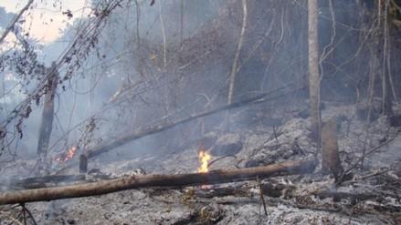 Cuatro incendios forestales afectaron bosques de San Martín