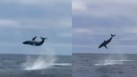 Facebook: tiburón sorprende a pescadores con estas acrobacias