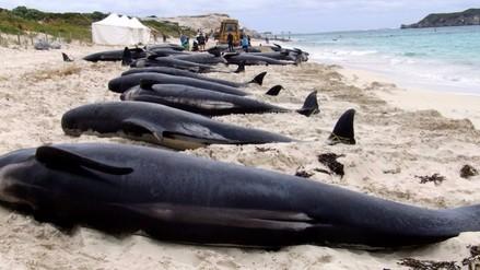 Chile: critican la indiferencia del gobierno ante la muerte de ballenas
